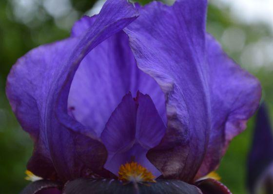 iris cavern