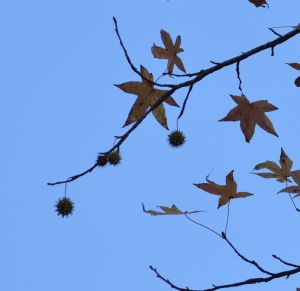 Miracles Involved - Sweet Gum