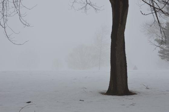 ghost tree trunk