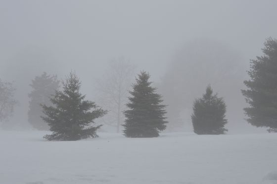 ghost trees trio