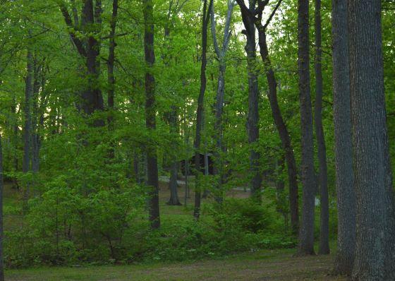 Woods - Hidden Places