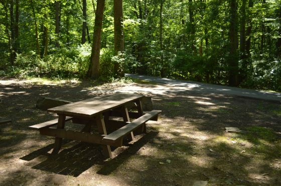 Picnic Bench on a Perfect Day