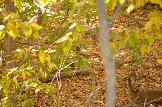Deer - Two