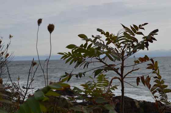 Yes - wildflowers along marginal way