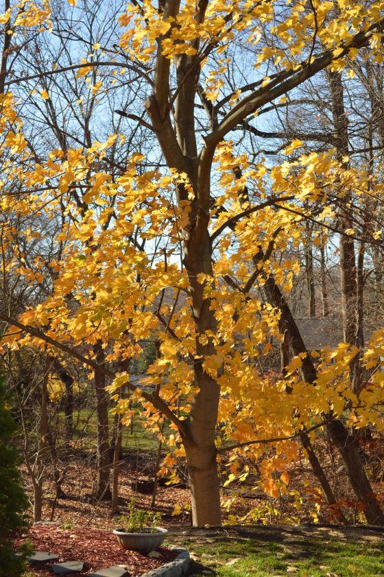 golden tree - side