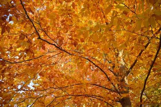 shelter - golde tree 1