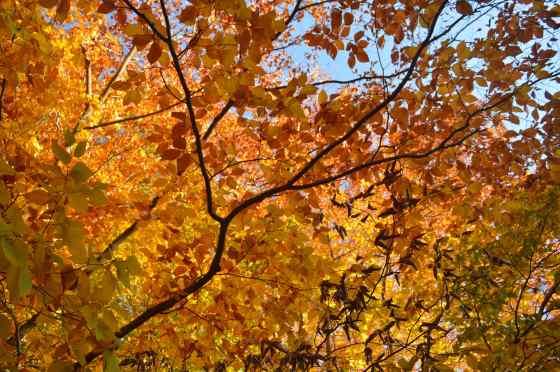 shelter - golde tree 5