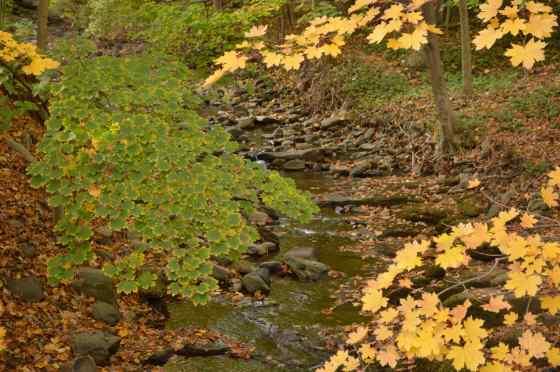 water - local stream