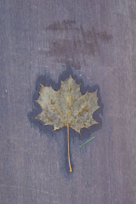 leaf on step