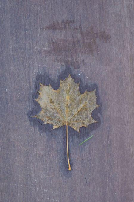 leaf on step