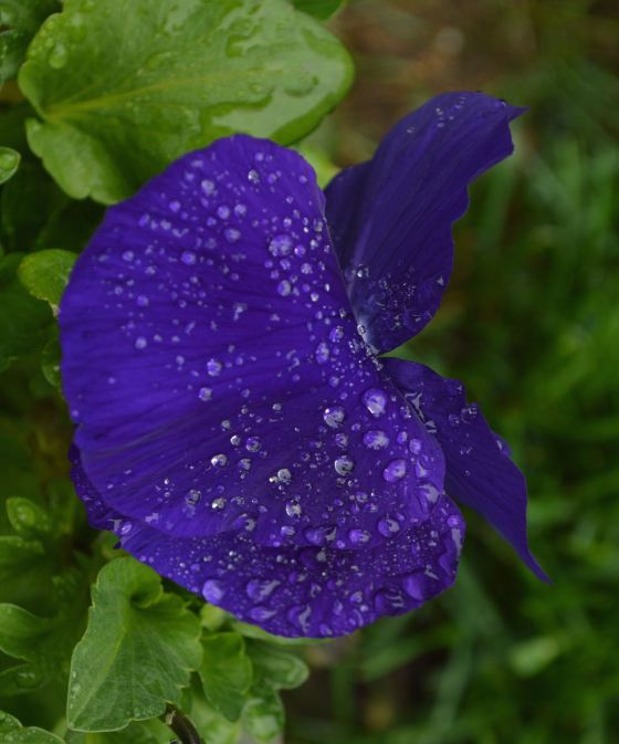 Water on flower 11