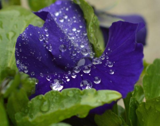 Water on flower 8