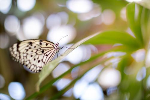 butterfly-1281872_1920